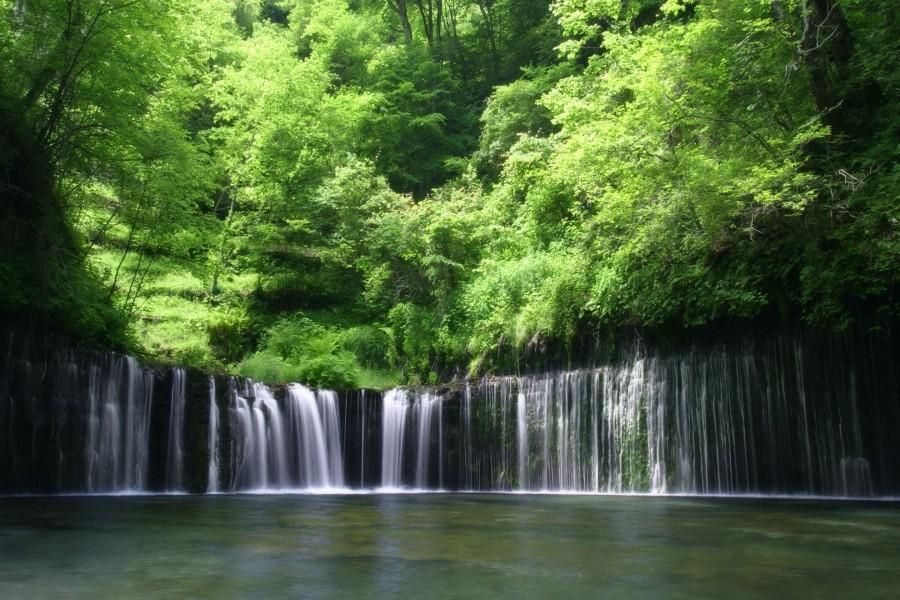 Árboles verdes sobre una cascada