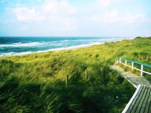 Camino verde hacia la playa