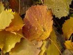 Agua sobre las hojas otoñales