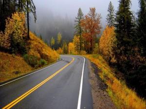 Paisaje otoñal junto a una carretera