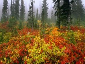 Arbustos en otoño