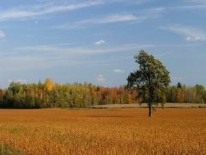 Árboles en un campo otoñal