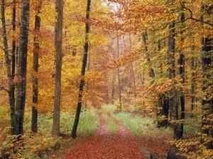 Hojas sobre el camino de un bosque