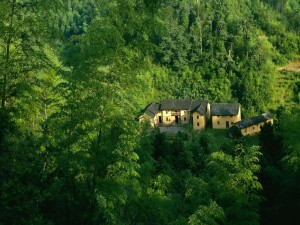 Casas en una zona cubierta de vegetación