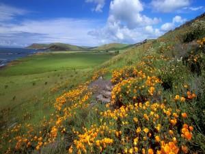 Flores en las montañas próximas al mar