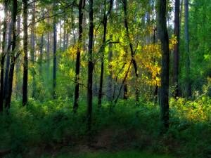 Luz en el interior del bosque