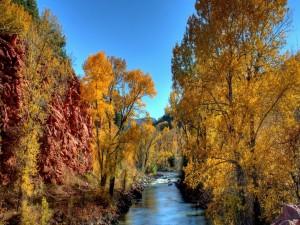 Árboles otoñales junto al cauce de un río