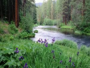 Flores junto al cauce de un río