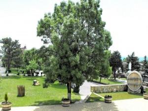 Gran árbol en un jardín