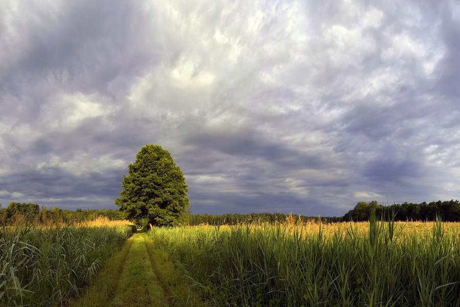 Camino verde por el campo