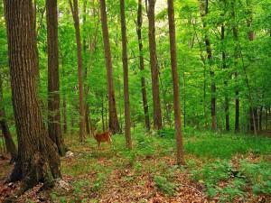 Un pequeño ciervo en el bosque