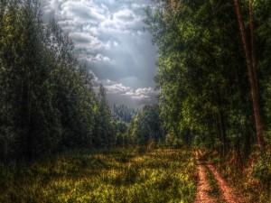 Camino por un claro del bosque