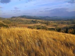 Campo de trigo en una colina
