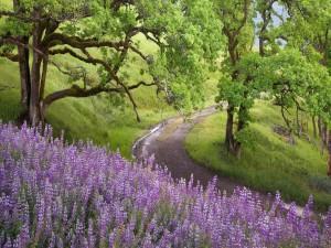 Bonitas flores junto a un camino