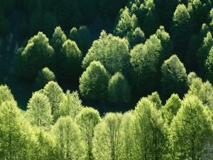 Árboles verdes recibiendo la luz del sol