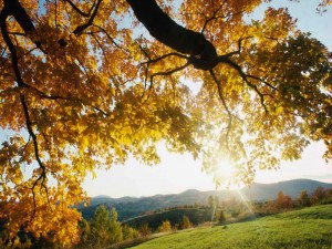 Sol brillando en otoño