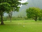 Aves en un prado verde