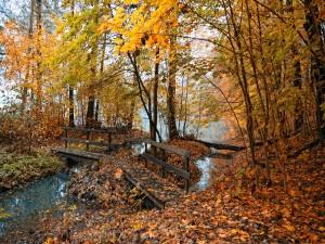 Pasarela de madera cubierta de hojas otoñales