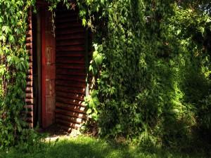 Plantas cubriendo la fachada de una casa