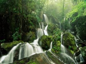 Varias cascadas en el bosque