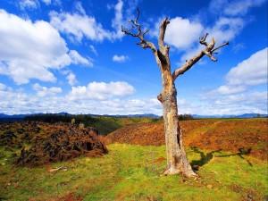Árbol desnudo en el campo