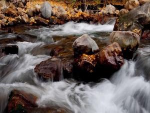 Piedras y hojas en el cauce de un río