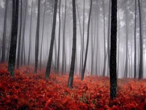 Helechos rojizos en un bosque