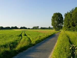 Pequeña carretera entre campos verdes