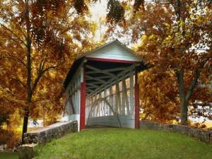 Árboles junto a un puente cubierto