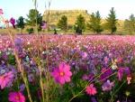 Bellas flores en la pradera
