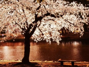 Noche de primavera