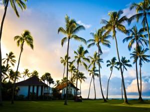 Casas y palmeras frente al mar