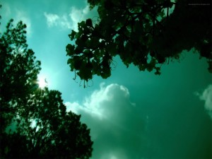 Árboles bajo un cielo nocturno