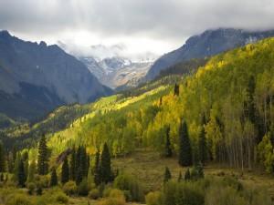 Nubes sobre las montañas y los pinos