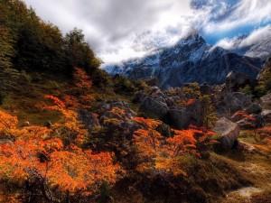Un bonito día de otoño en la montaña