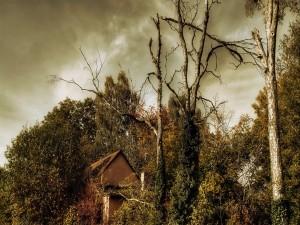 Árboles rodeando una casa