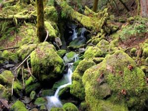 Agua en el bosque