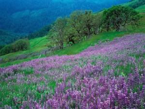 Flores sobre la hierba