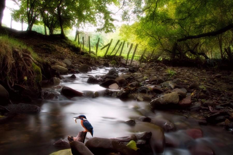 Martín pescador en el cauce de un río