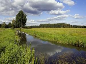 Agua estancada en el campo