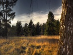 Árboles en un campo