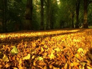 Hojas otoñales cubriendo el suelo