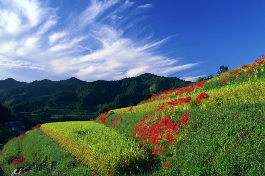 Flores rojas bajo un cielo azul