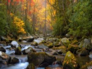 Río en un bosque otoñal