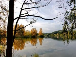 Árboles junto a un lago