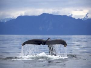 La cola de una ballena fuera del agua