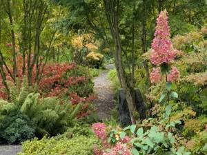 Camino entre árboles y plantas
