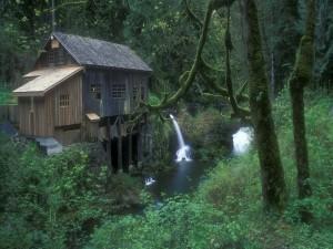Cabaña en el bosque junto a un río
