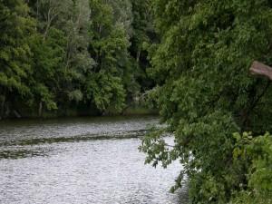 Árboles junto al río