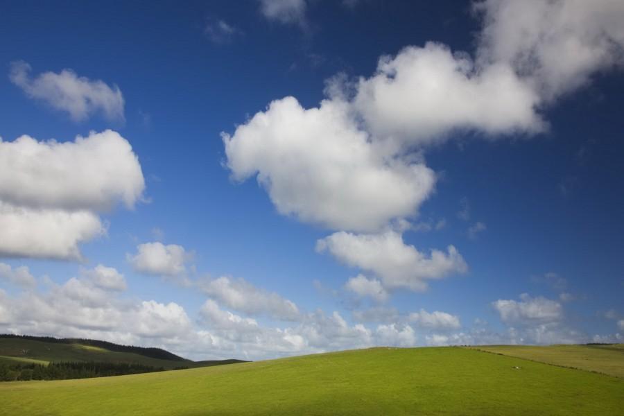 Nubes blancas sobre un campo verde